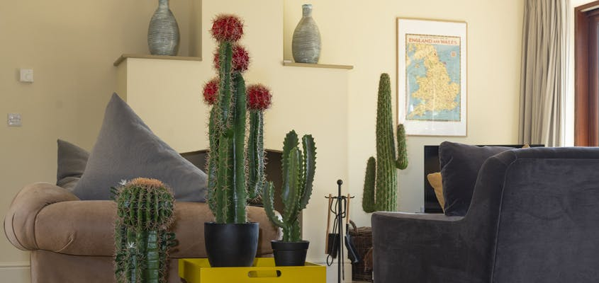 group of artificial cacti