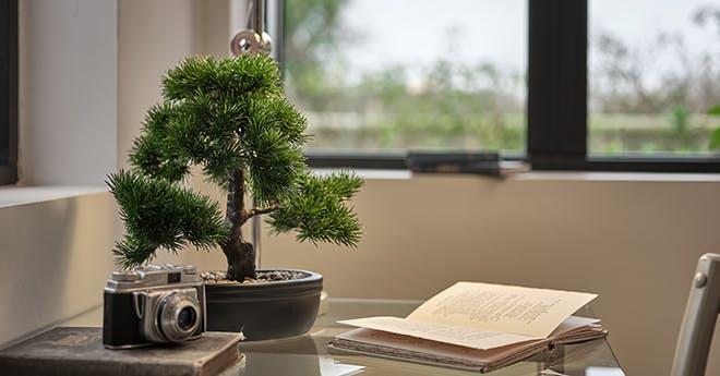 Artifiical bonsai plant - desktop faux plants