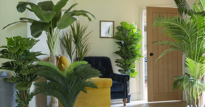 Exotic palms in cozy entrance