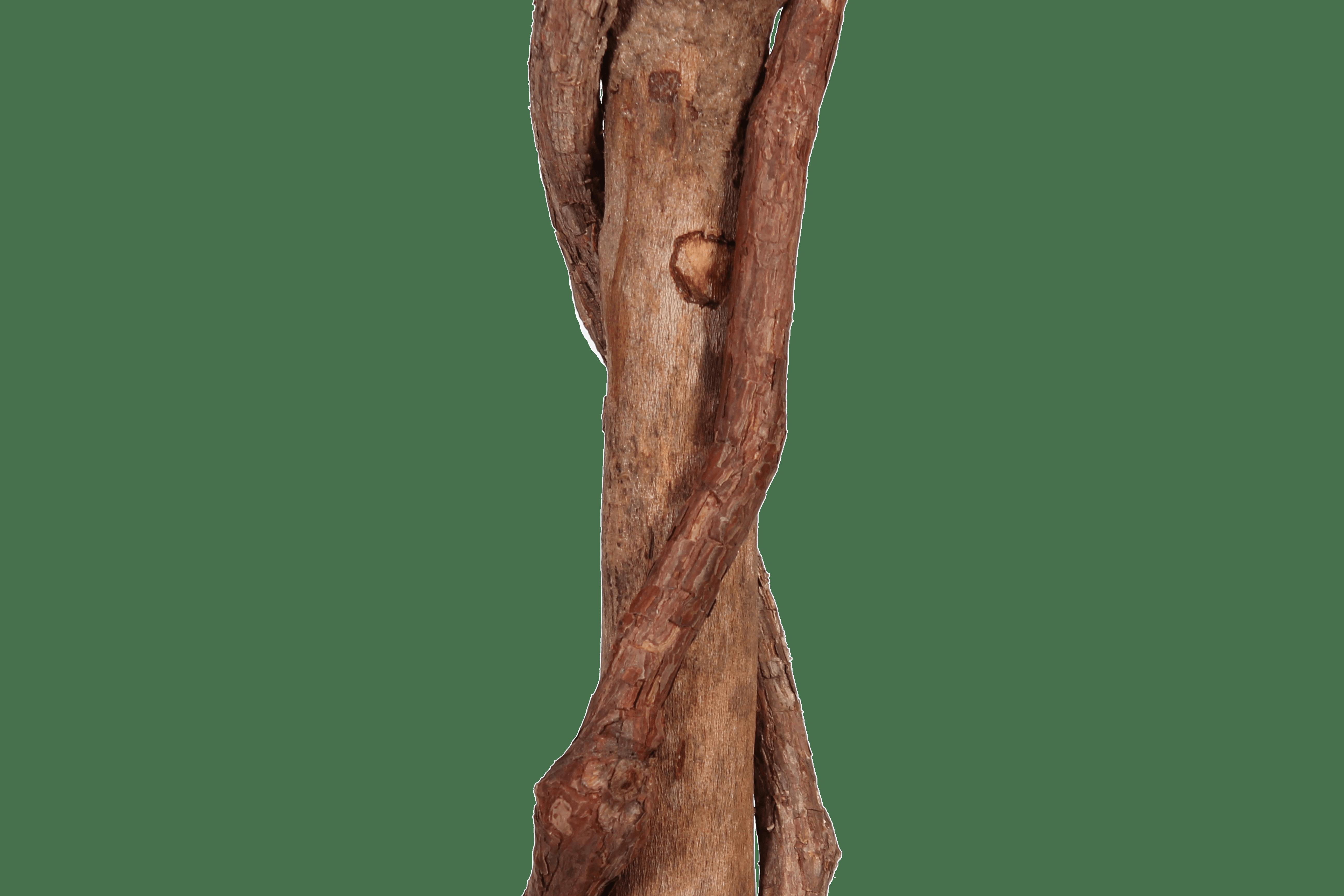 Artificial bay tree stem close up
