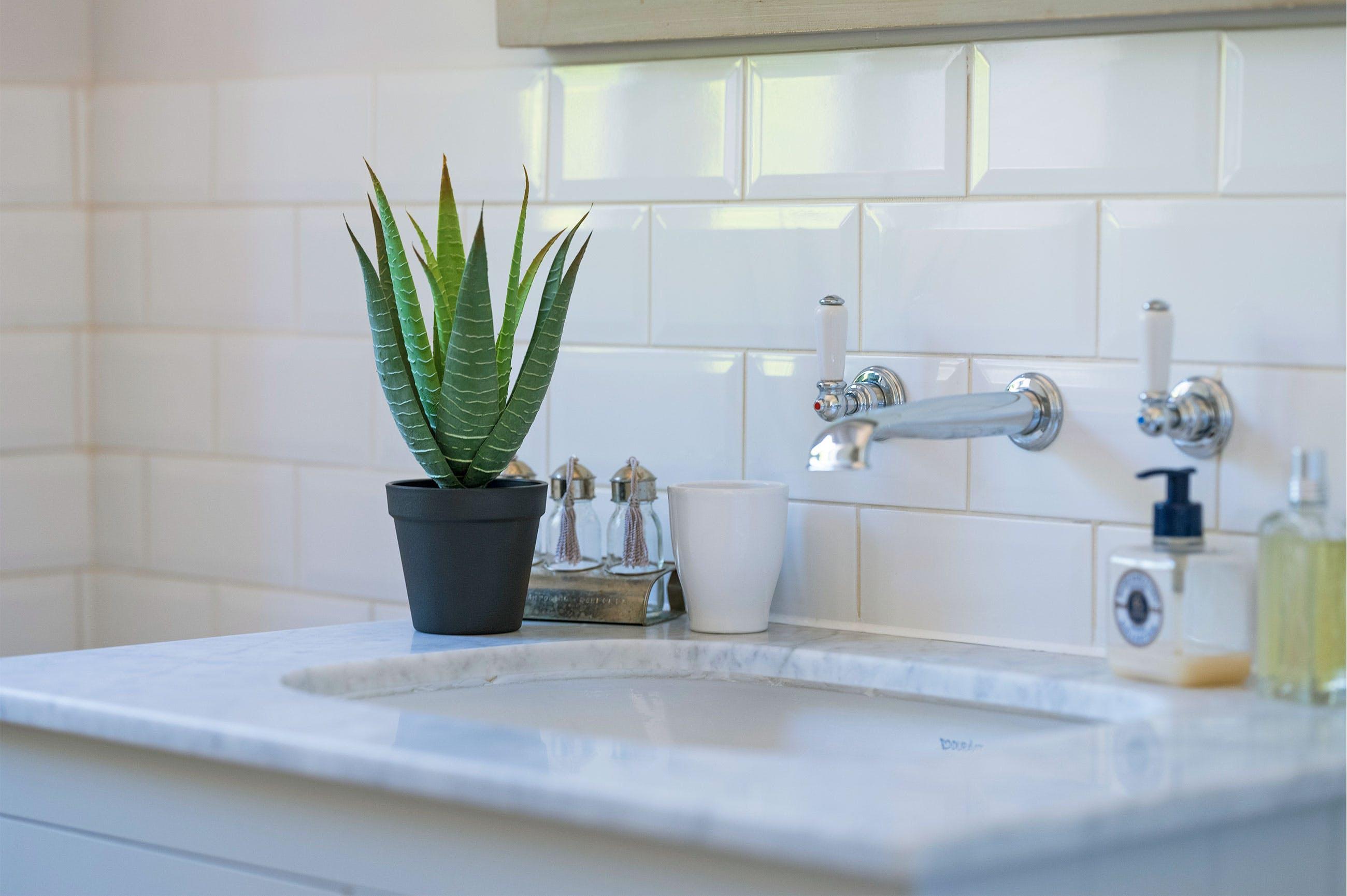 Aloe Vera on a bathroom sink countertop