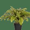 Artificial boston fern plant