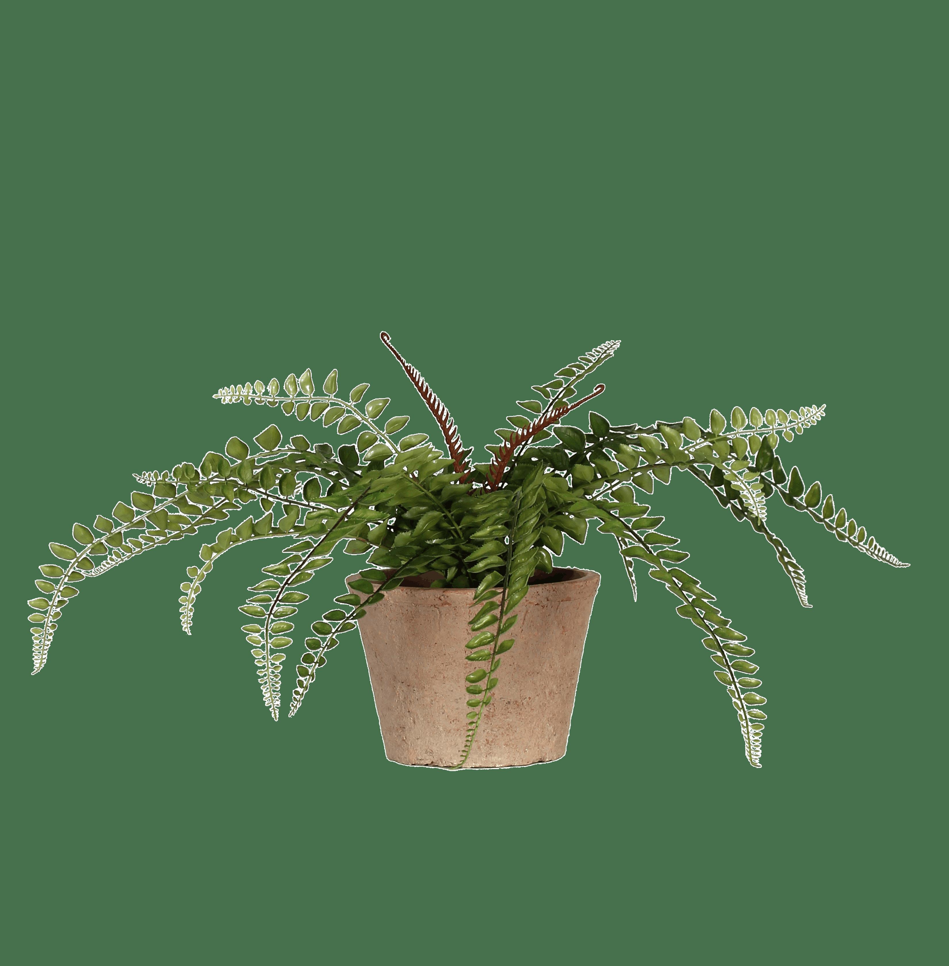 Artificial button fern