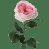 Artificial cabbage rose stem pink