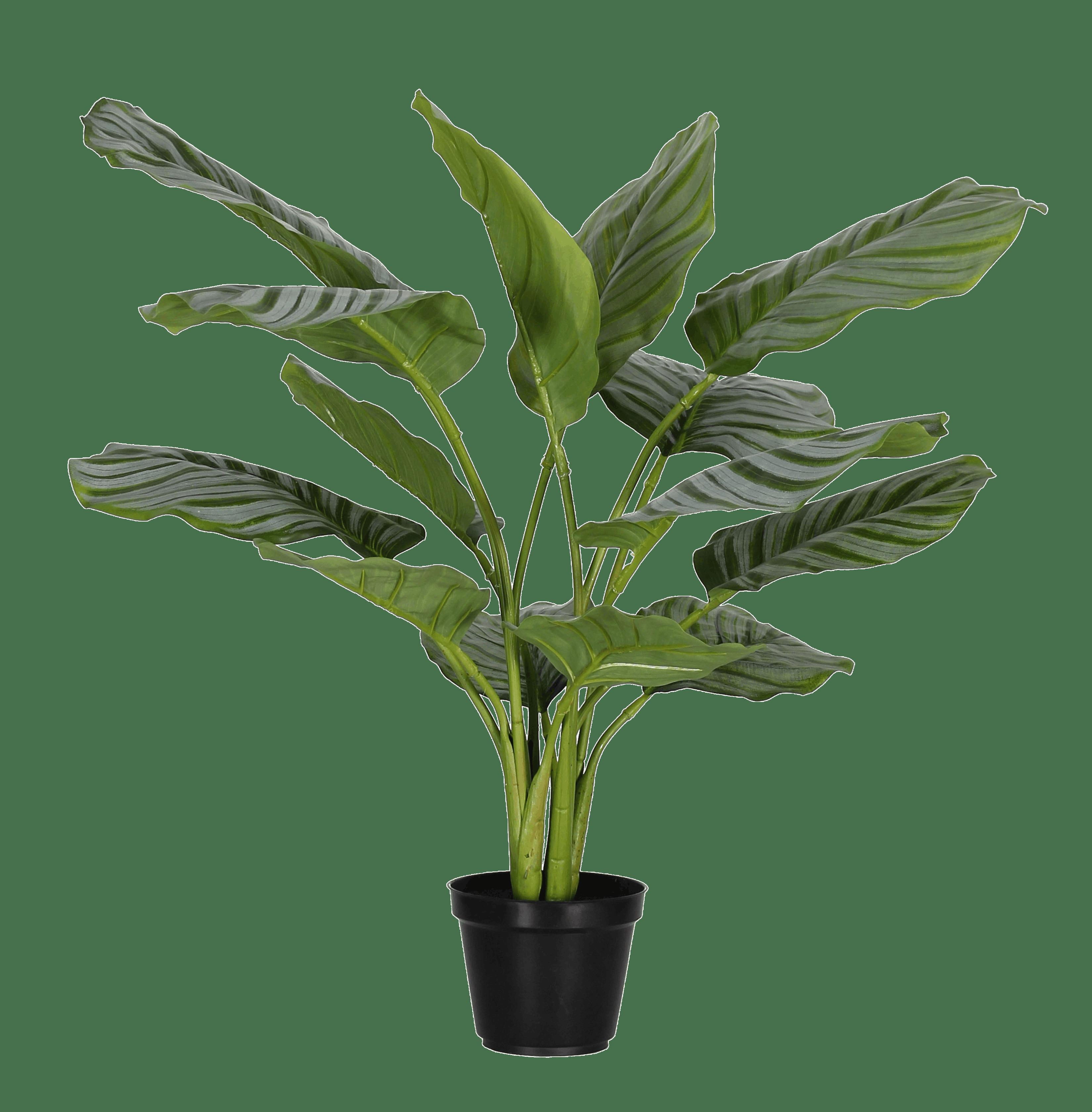 Artificial calathea orbifolia
