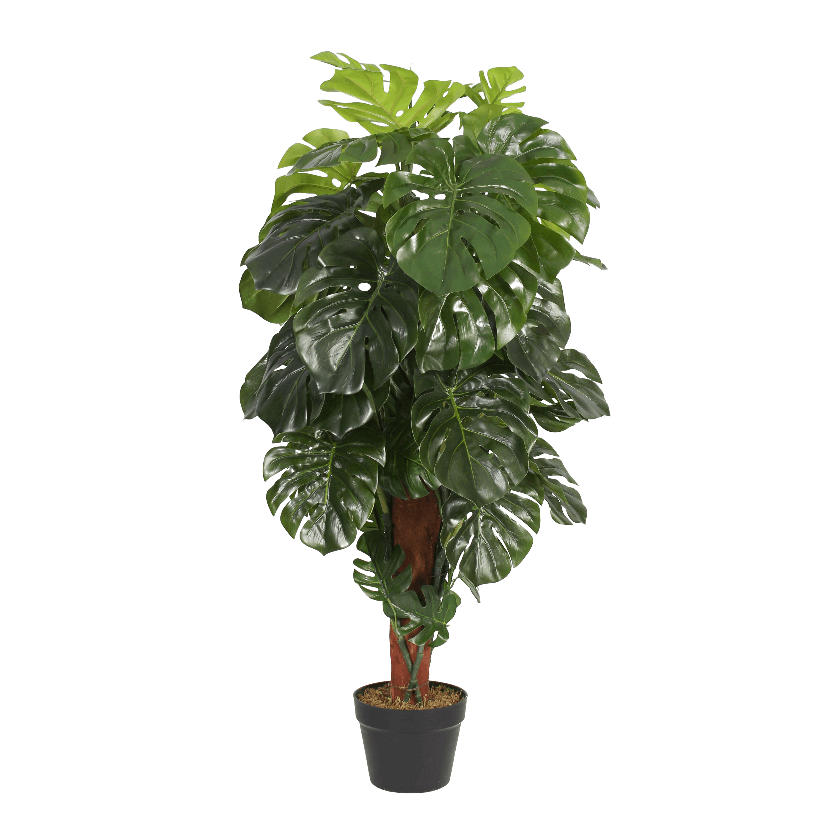 Artificial cheeseplant 120cm