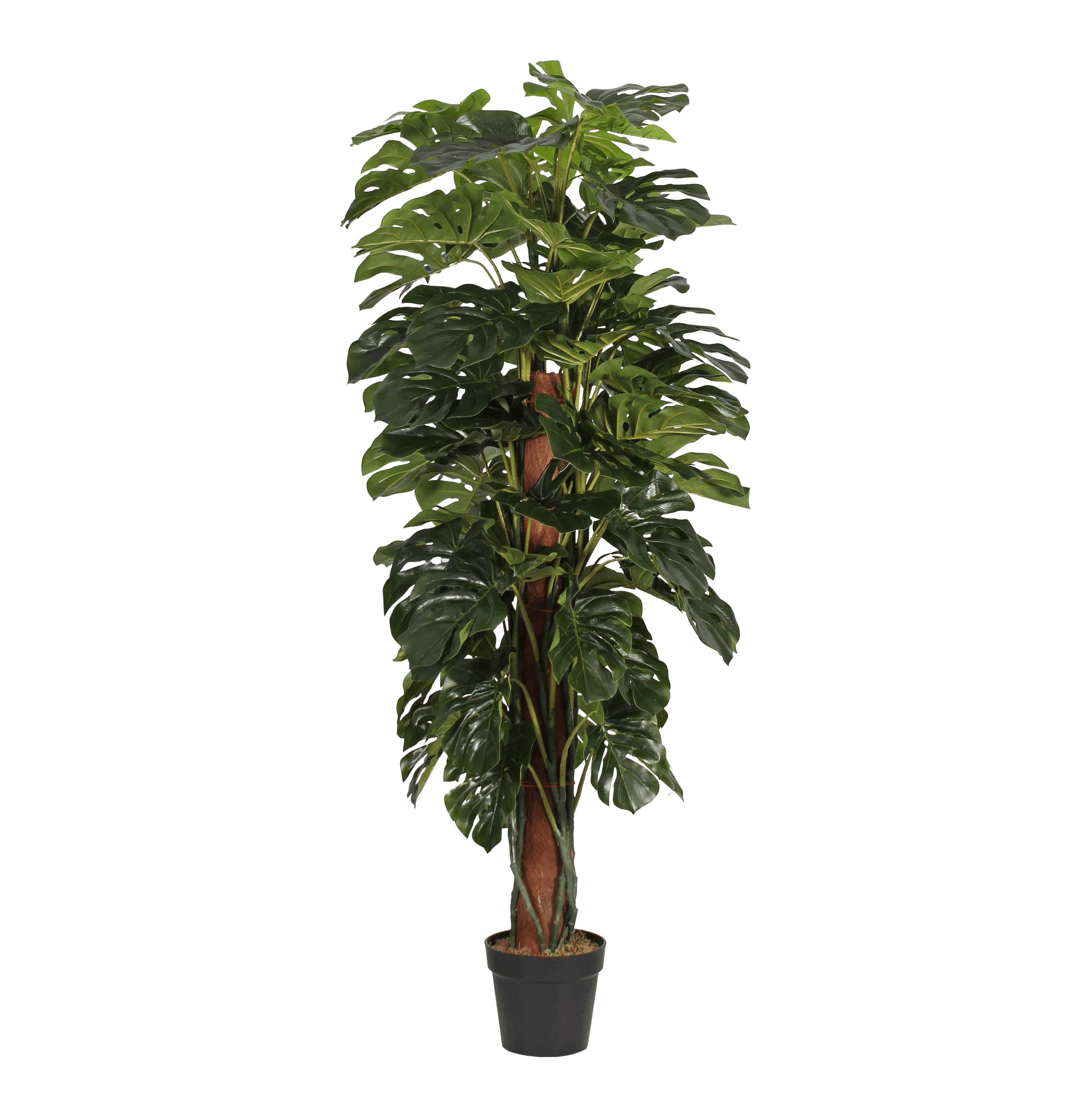 Artificial cheeseplant 150cm