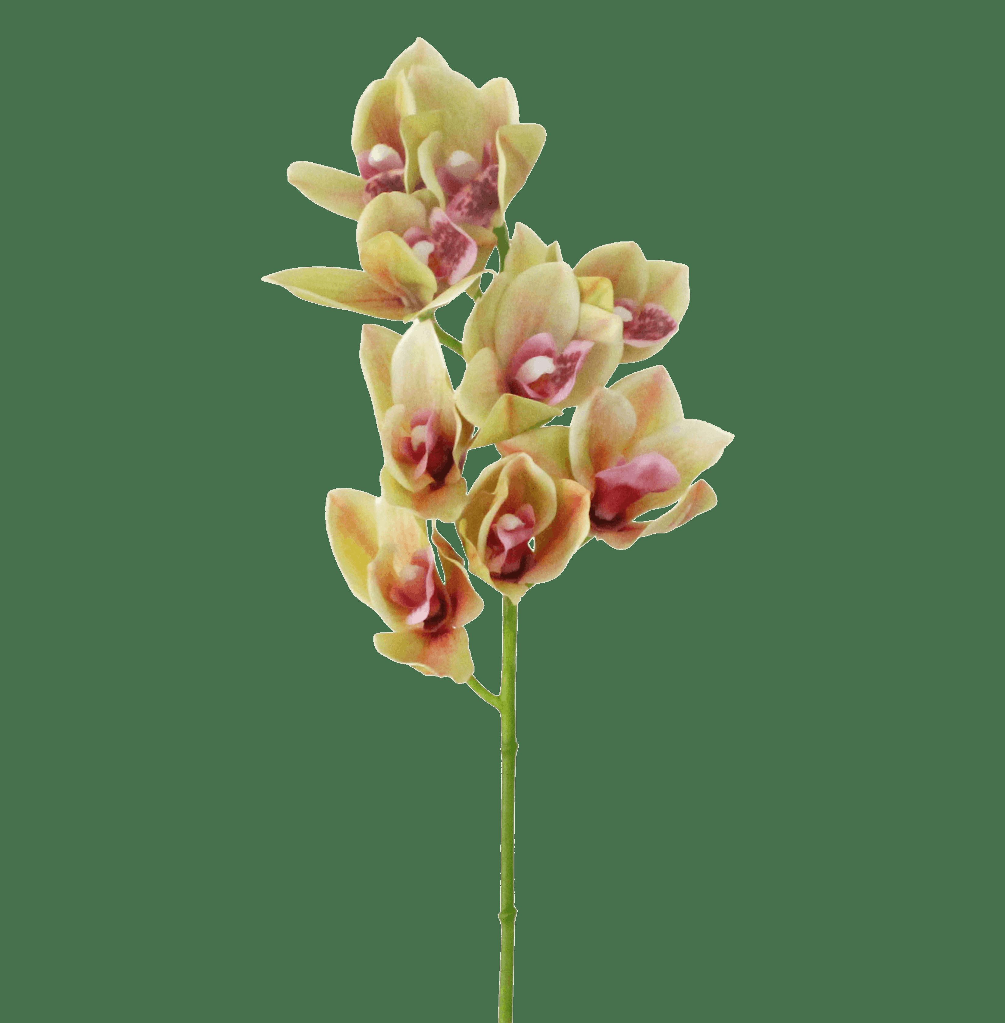 Artificial cymbidium orchid stem