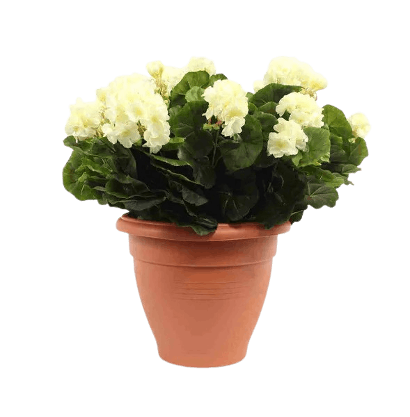 Artificial geranium patio planter cream