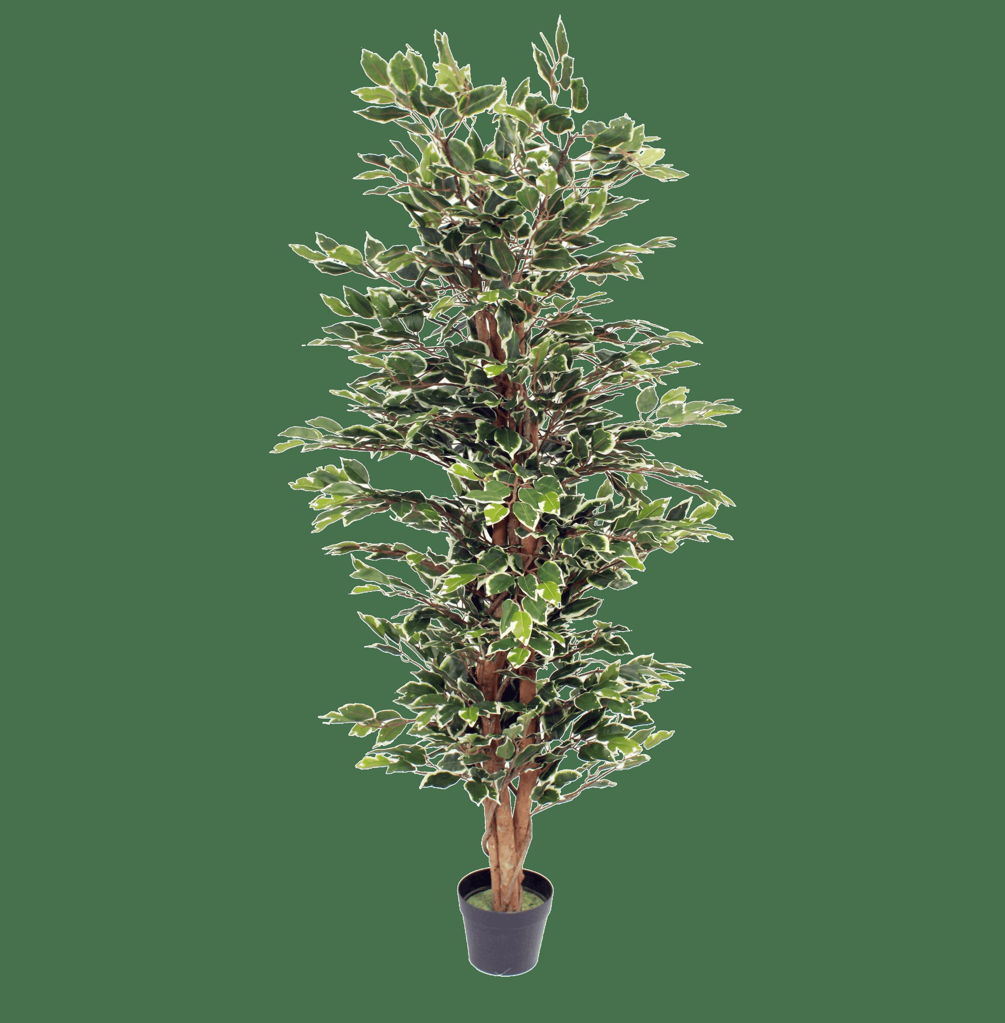 Artificial variegated ficus tree 150cm