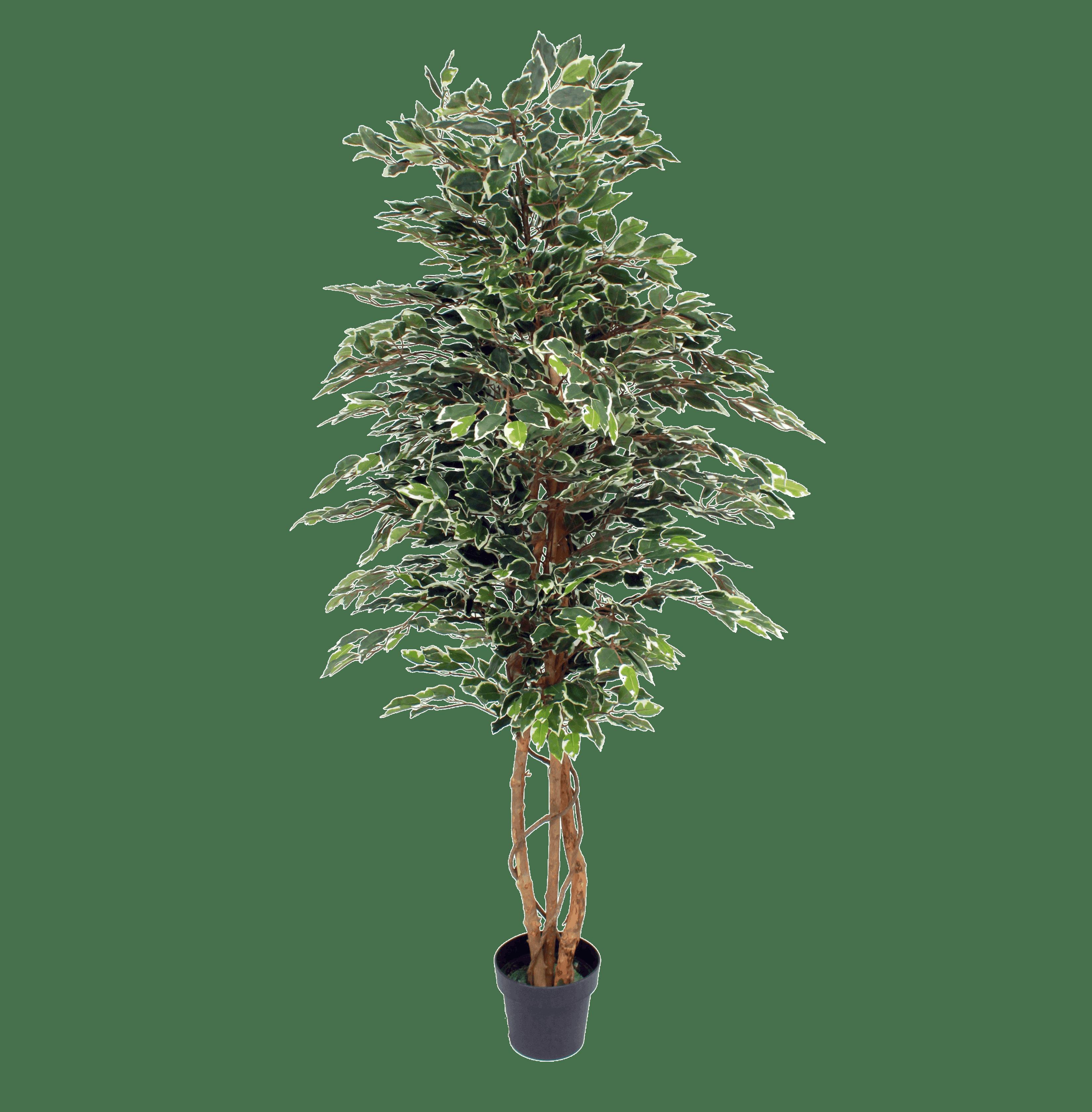 Artificial variegated ficus tree 180cm