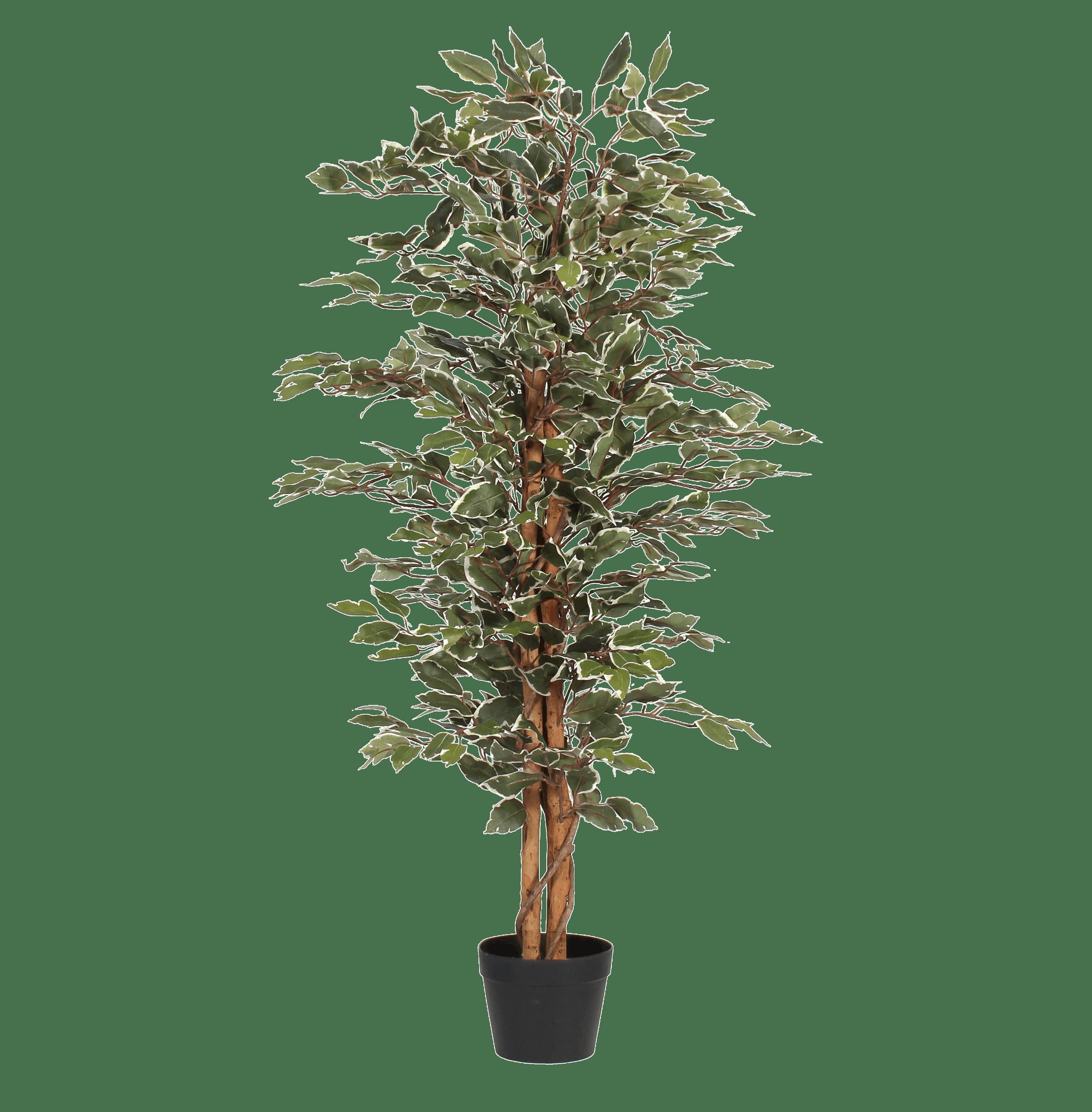 Artificial variegated ficus tree 120cm