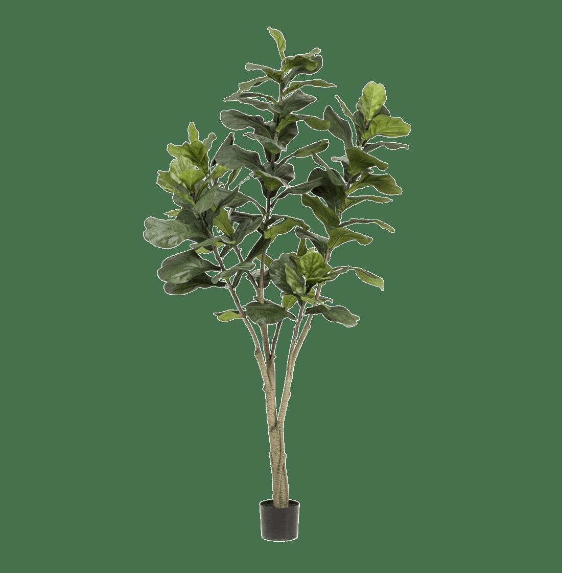 Artificial fiddle leaf fig 210cm