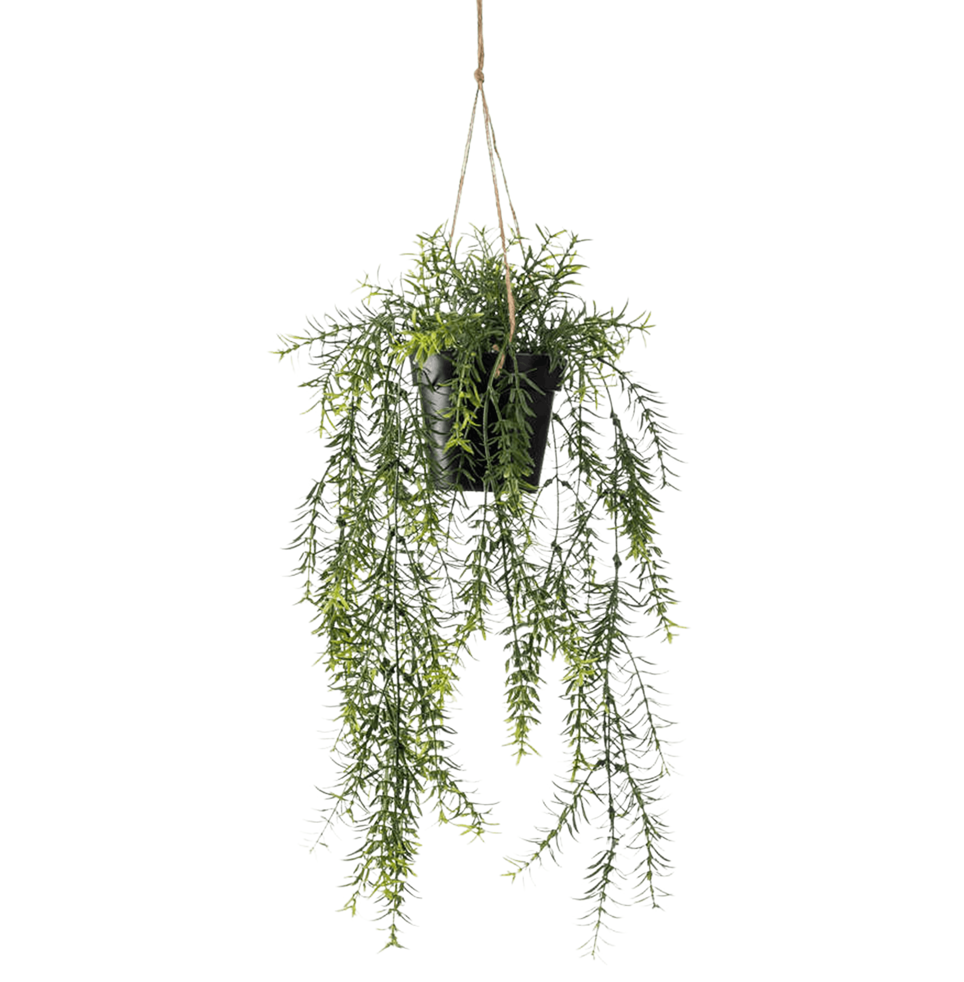 Artificial hanging asparagus