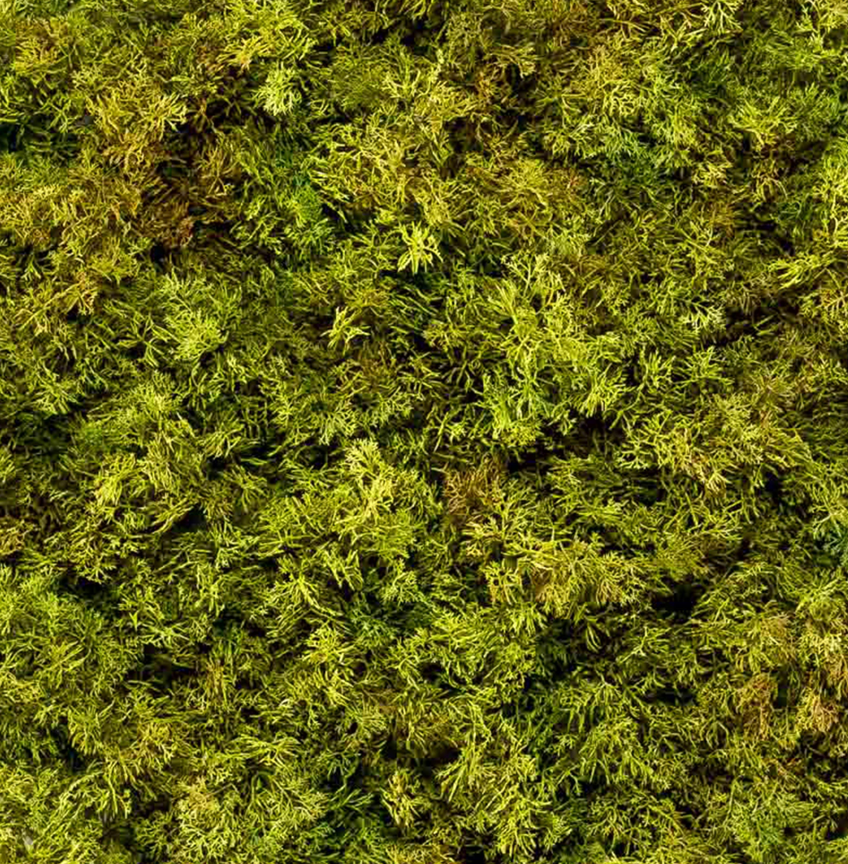 Artificial icelandic moss wall panel