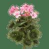 Artificial geranium bush pink