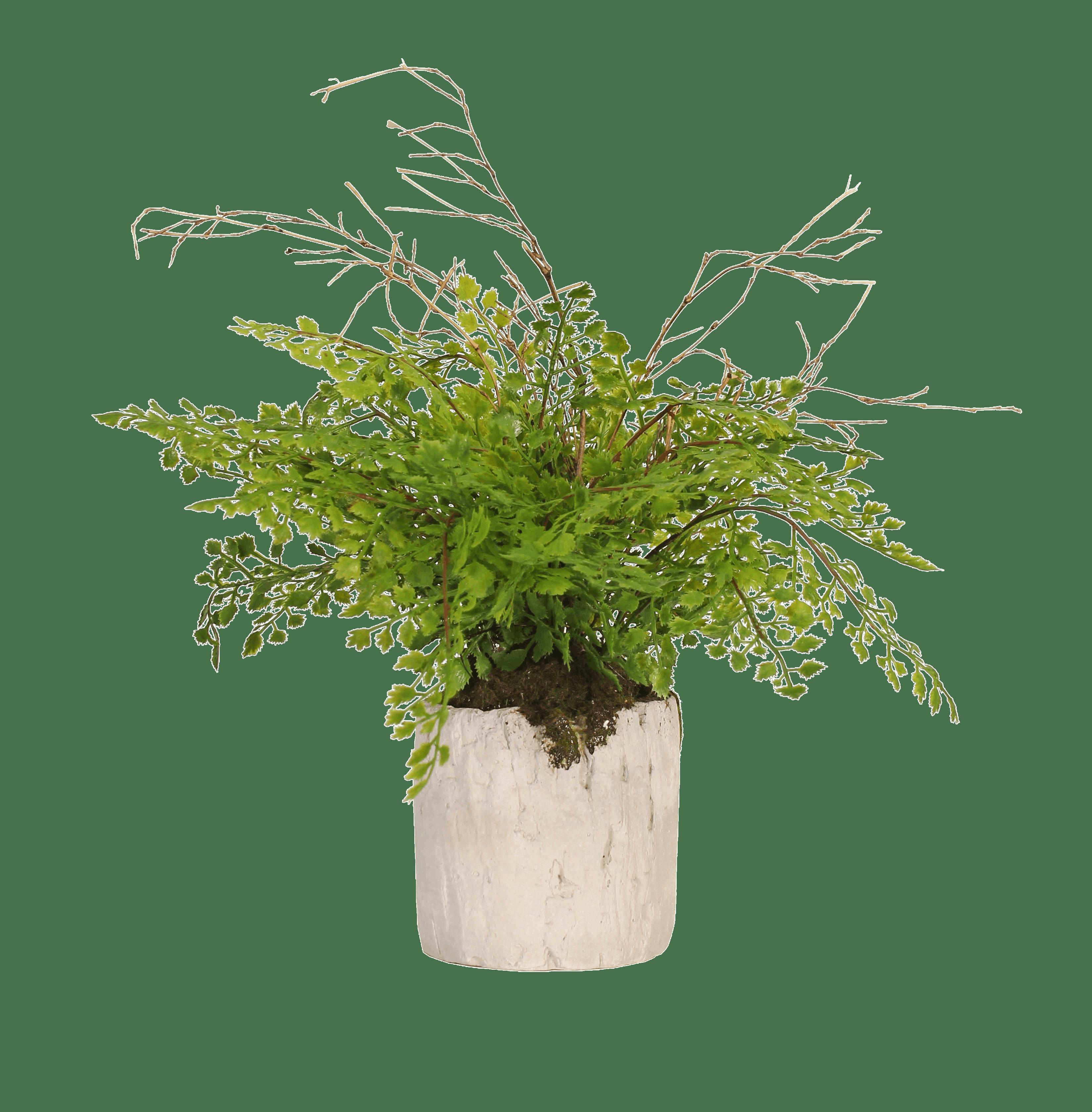 Artificial maidenhair fern