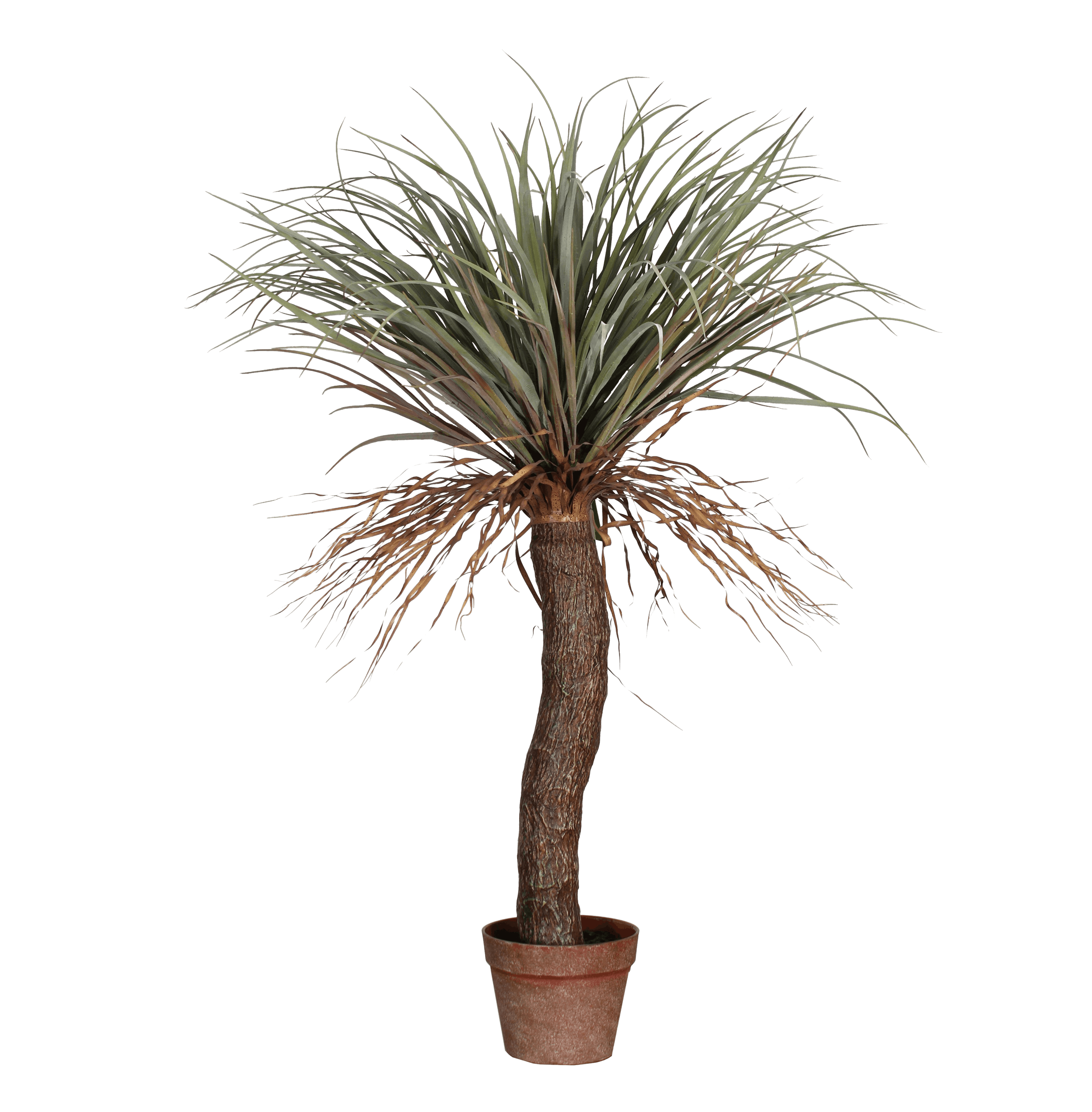 Artificial new Zealand cabbage palm