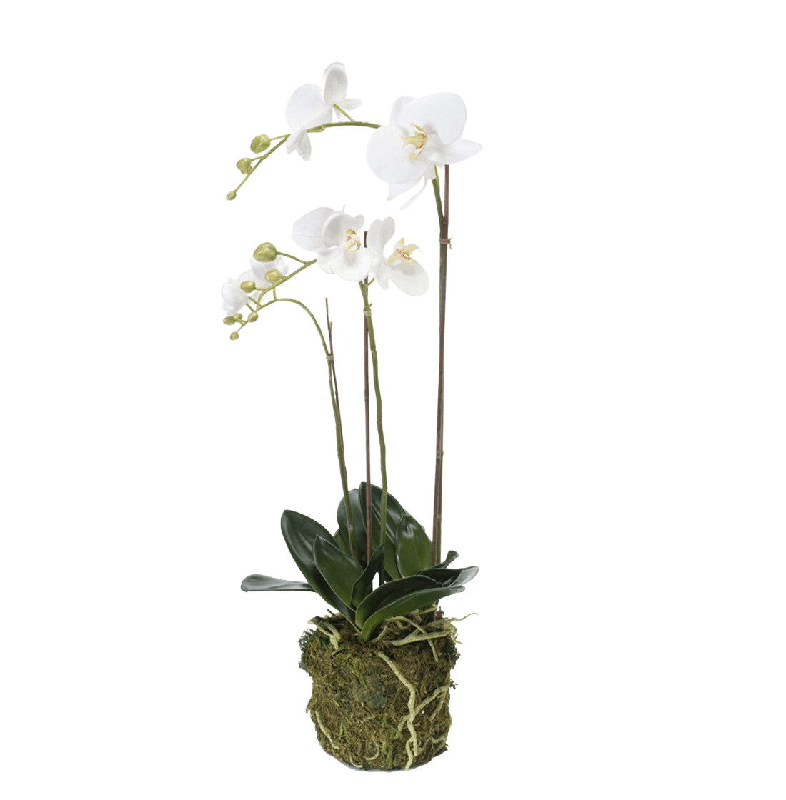 Artificial moth phalaenopsis orchid