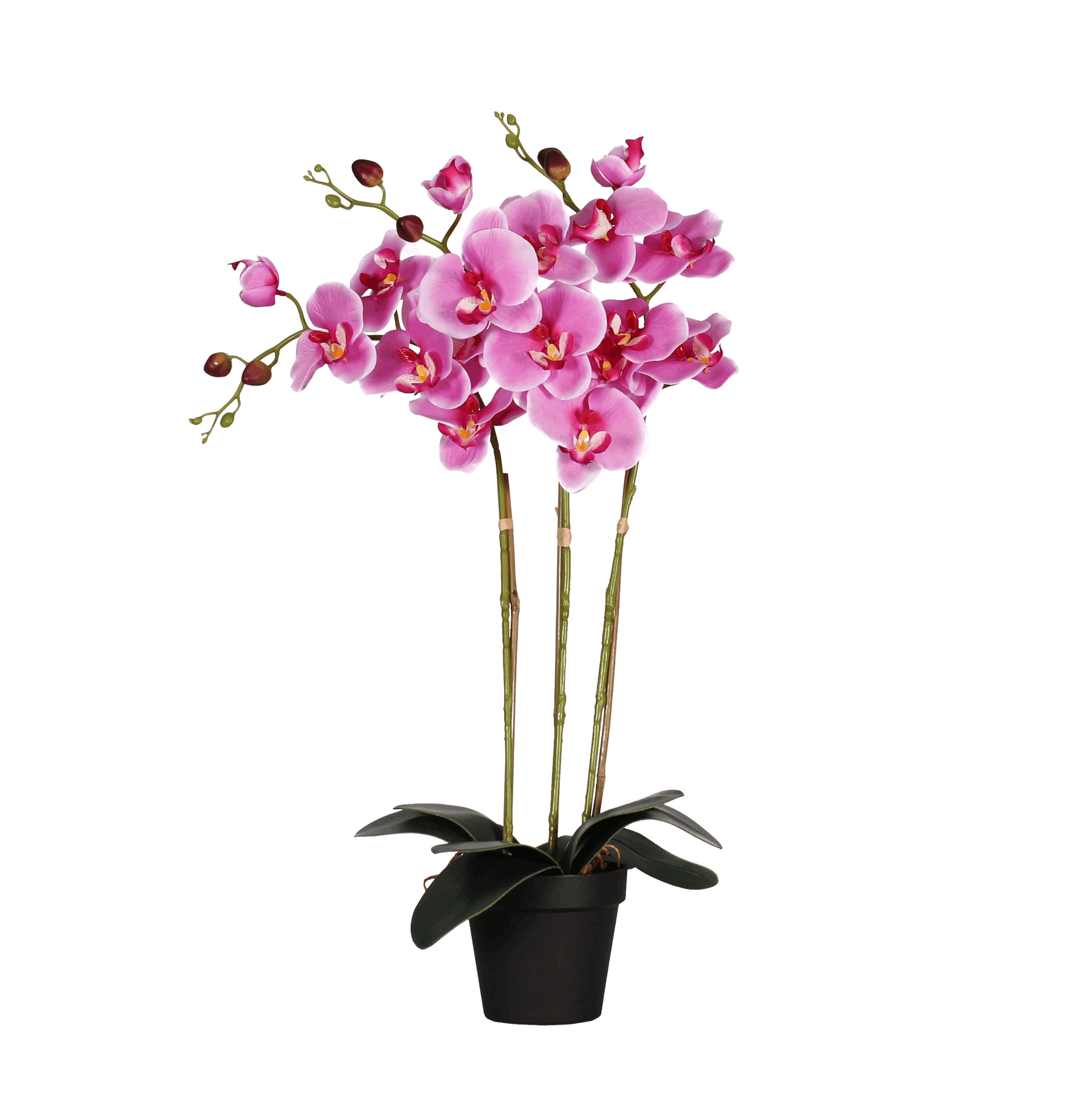 Artificial phalaenopsis orchid pink