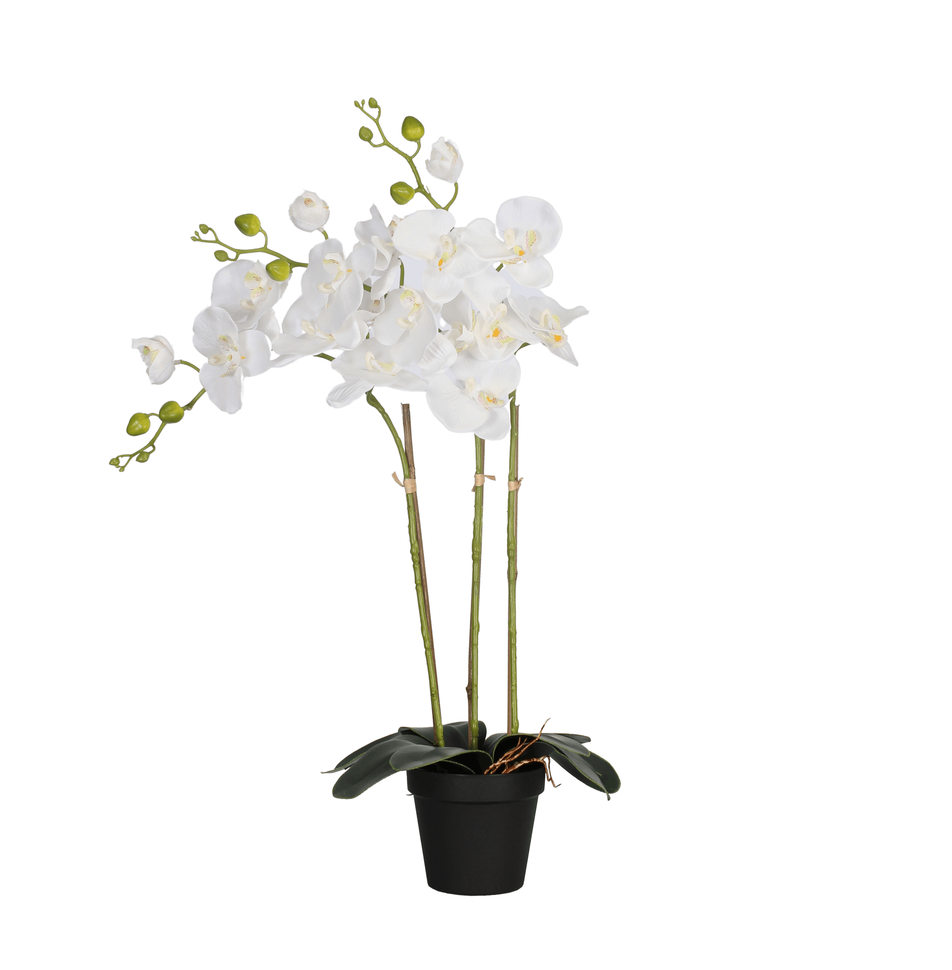 Artificial phalaenopsis orchid white