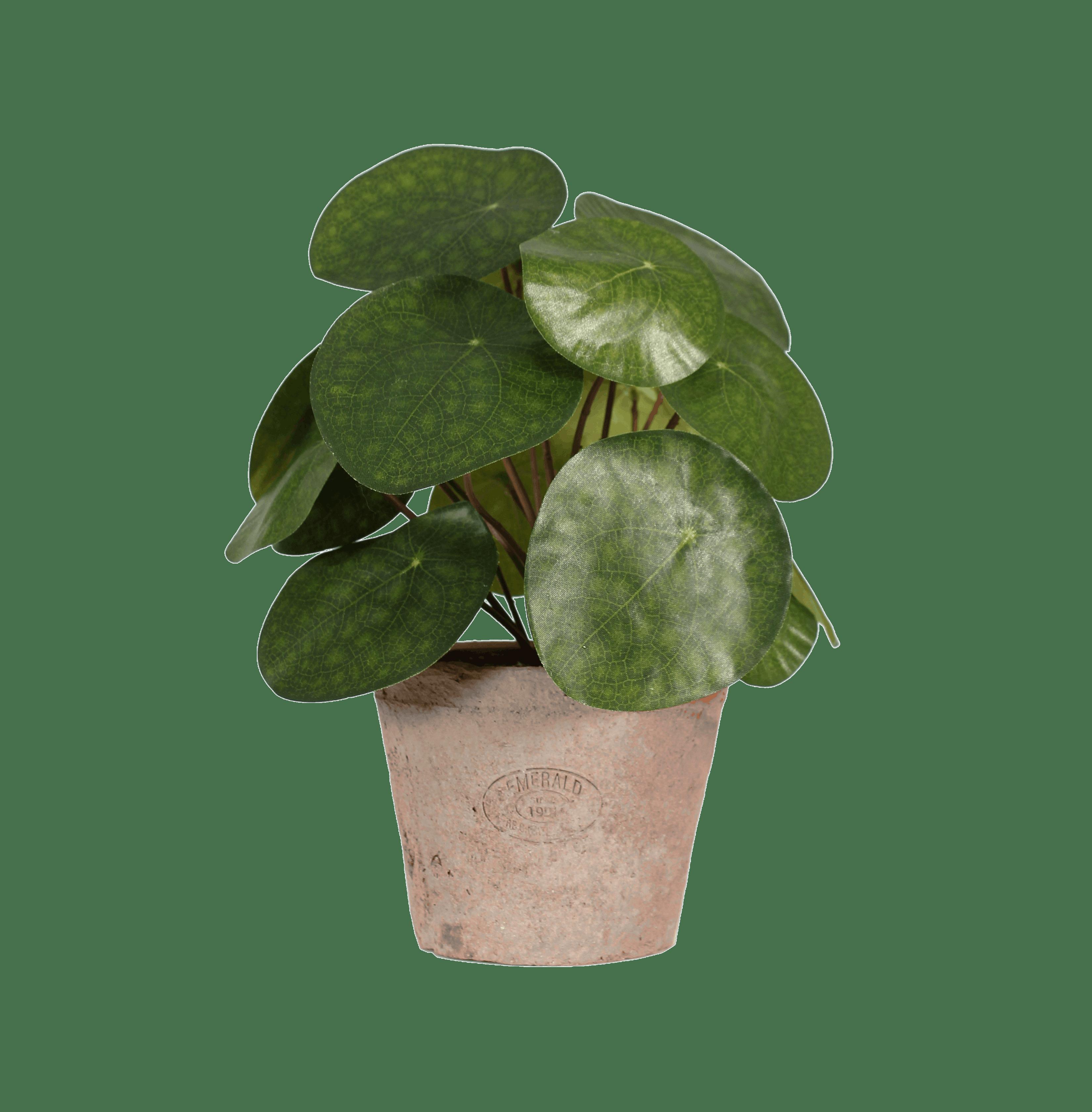Artificial pilea bush