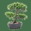 Artificial podocarpus bonsai