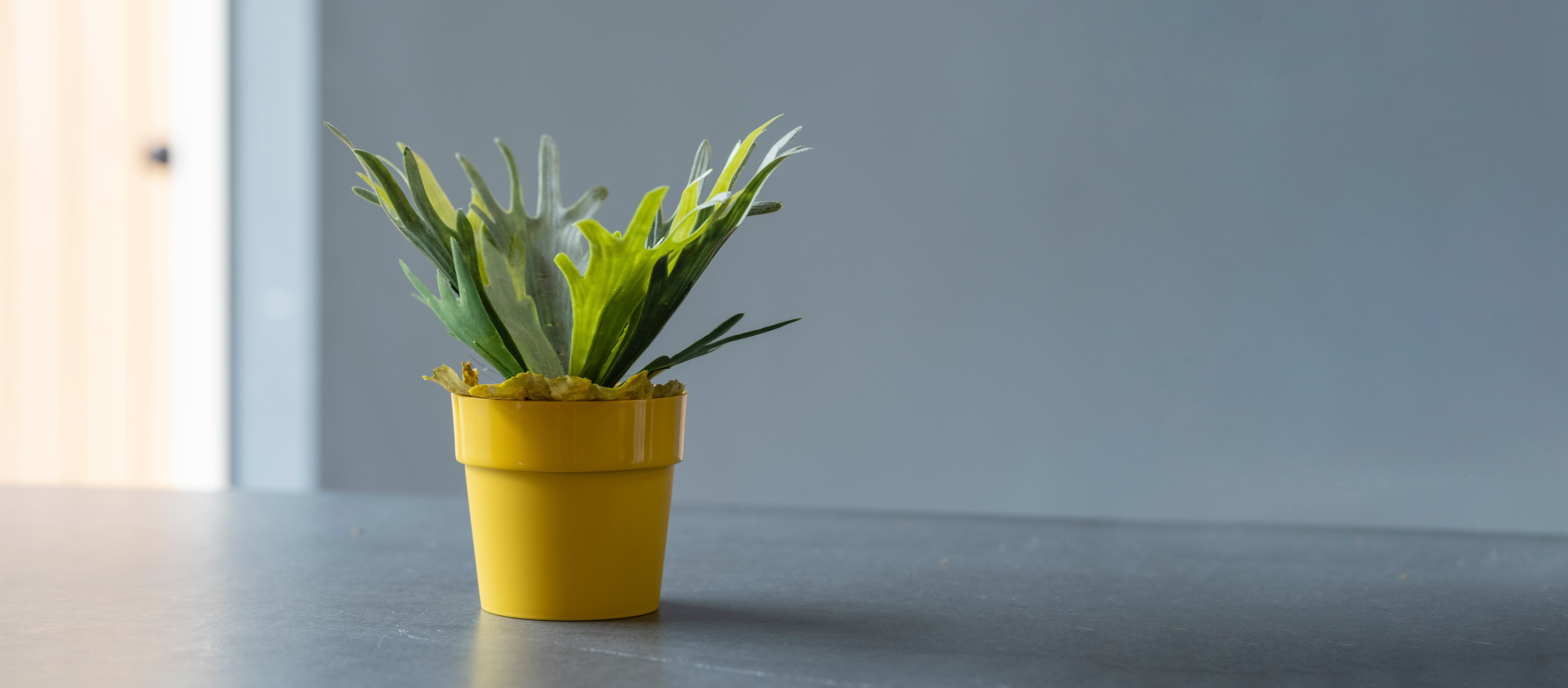 Artificial staghorn fern on table
