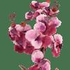 Pink artificial vanda orchid close up