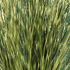 Artificial zebra grass close up