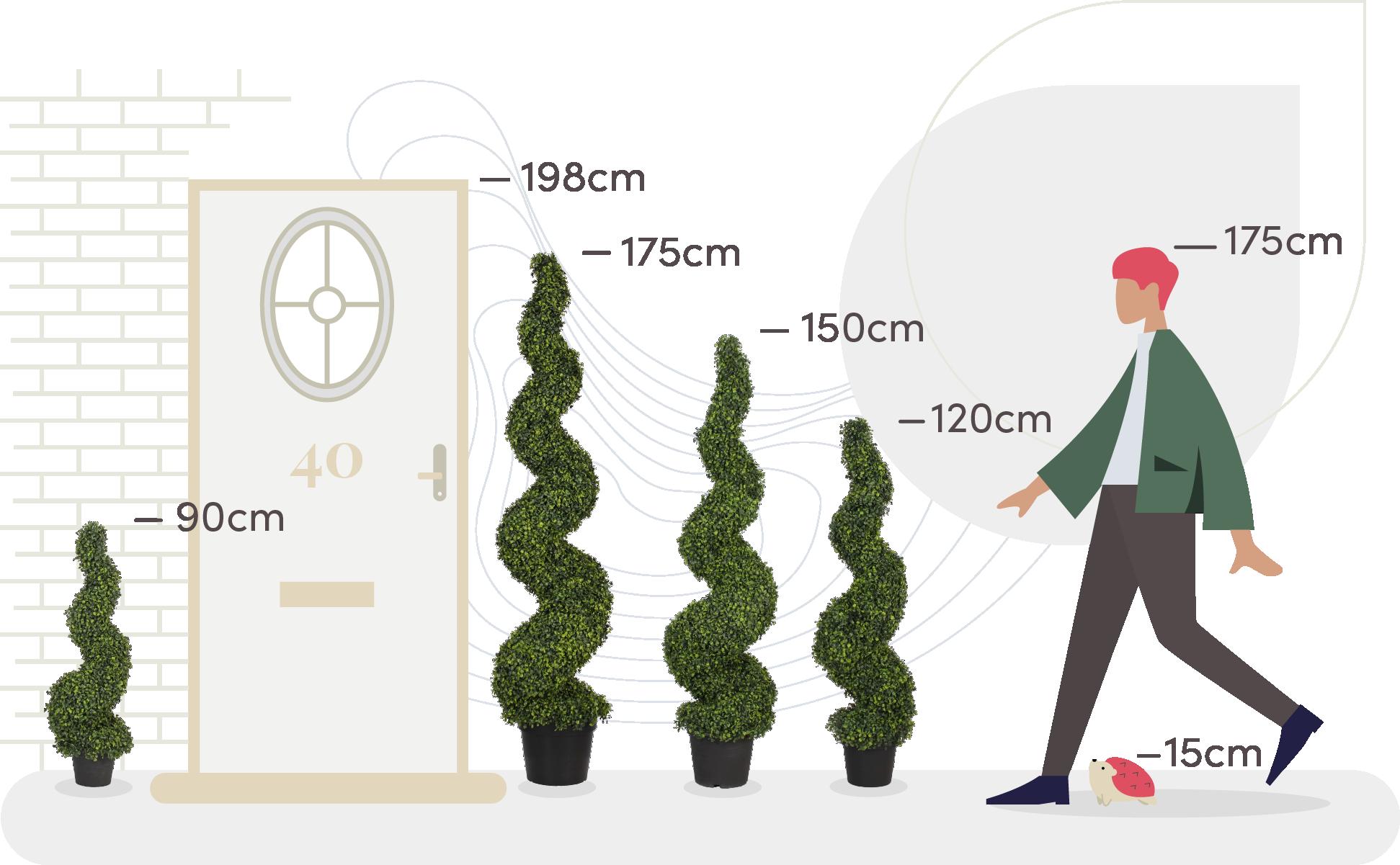 Boxwood spiral size comparison