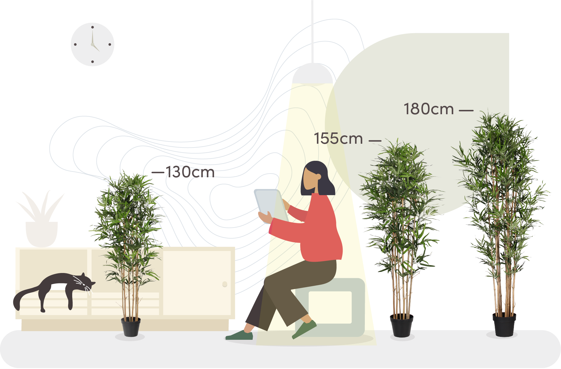 Oriental bamboo tree size comaparison